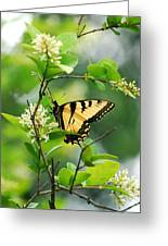 Butterfly Tiger Swallow Greeting Card