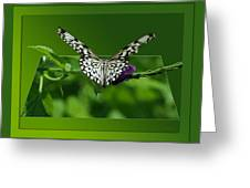 Butterfly White 16 By 20 Greeting Card