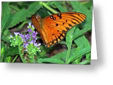 Butterfly's Delight Greeting Card