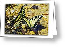 Butterlies At The Beach Greeting Card