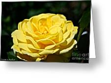 Buttery Rose Greeting Card