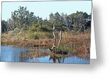 Buxton Salt Marsh - Outer Banks Nc Greeting Card