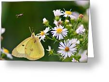 Buzzed Butterfly Greeting Card