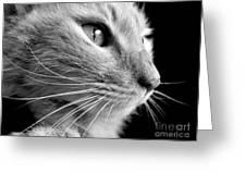 Bw Kitty Greeting Card