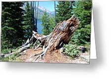 By Jenny Lake Greeting Card