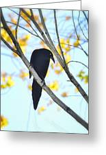 Bye Bye Blackbird  Greeting Card