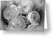Cabbage Roses Greeting Card