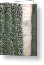Cabo Cacti Before Greeting Card
