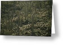 Cacti Near Tucson, Arizona Greeting Card