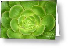 Cactus 11 Greeting Card