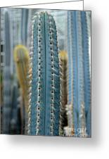 Cactus 14 Greeting Card