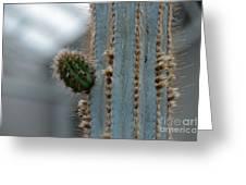 Cactus 17 Greeting Card