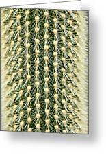 Cactus 21 Contrast Greeting Card