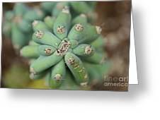 Cactus 25 Greeting Card