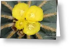 Cactus 37 Greeting Card