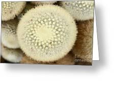 Cactus 44 Greeting Card