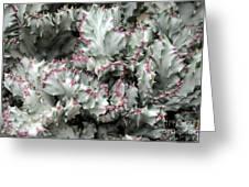 Cactus 58 Greeting Card