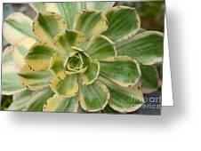 Cactus 63 Greeting Card