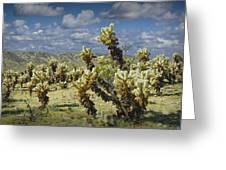Cactus Also Called Teddy Bear Cholla Greeting Card