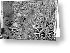 Cactus And Rocks Greeting Card