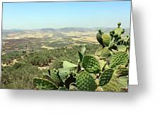Cactus At Samaria Greeting Card