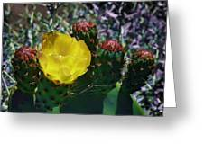 Cactus Blossom 8 Greeting Card