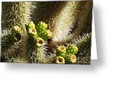 Cactus Buds Greeting Card