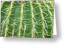 Cactus Close Trouble Greeting Card