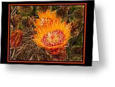 Cactus Flower 3 Greeting Card