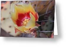 Cactus Flower Art In My Garden Greeting Card