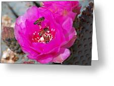 Cactus Flower Buzz Greeting Card