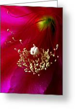 Cactus Flower Interior Greeting Card