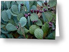 Cactus Plants Greeting Card