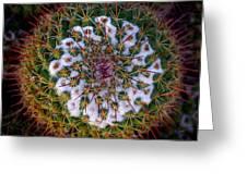 Cactus Radiance Greeting Card