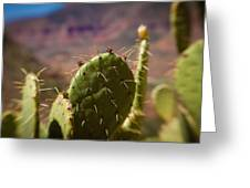 Cactus With A View Greeting Card