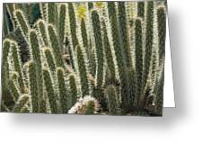 Cactus With Halos Greeting Card