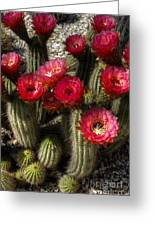 Cactus With Red Flowers Greeting Card