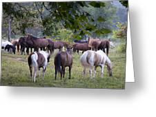 Cades Cove Horses Greeting Card