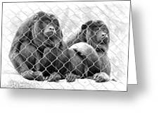 Caged And Captive Greeting Card