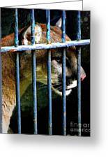 Caged Beauty Greeting Card