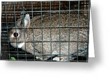 Caged Rabbit Greeting Card