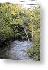 Cahaba River Shadows Greeting Card