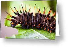 Cairns Birdwing Butterfly Caterpillar Greeting Card