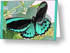 Butterfly Of Many Colors Greeting Card