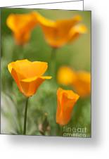 Cal Poppies Greeting Card