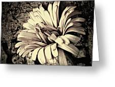 Calendula In Browns Greeting Card