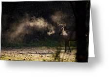 Calf Elk With Steaming Breath At Lost Valley Greeting Card