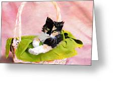 Calico Kitty In Basket Greeting Card