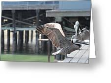 California Brown Pelicans 2 Greeting Card