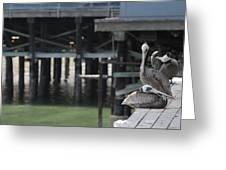 California Brown Pelicans 3 Greeting Card